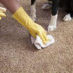 Фото 10: Как почистить палас