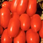 Фото 10: Каспар помидор