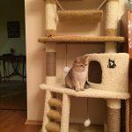 Фото 60: Кошачий домик