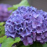 Фото 56: Садовые цветы