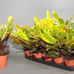 Фото 23: Цветочные растения