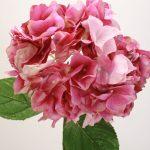 Фото 65: Цветы