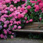 Фото 58: Цветы