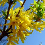 Фото 14: Лимонный цветок