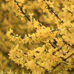 Фото 19: Жёлтый цветок