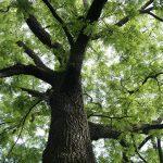 Фото 21: Дерево