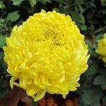 Фото 3: Жёлтые цветы
