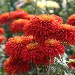 Фото 29: Садовые цветы
