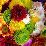Фото 30: Садовый цветок