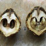 Фото 16: Чёрные орехи